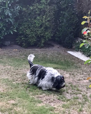 Hier schnüffele ich  in Mamas Garten, da soll irgendwo ein Leckerli liegen.