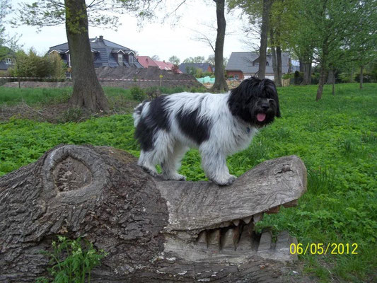 Dann waren wir auf Aurels Spazierweg. Sie hat ein eigenes Krokodil.