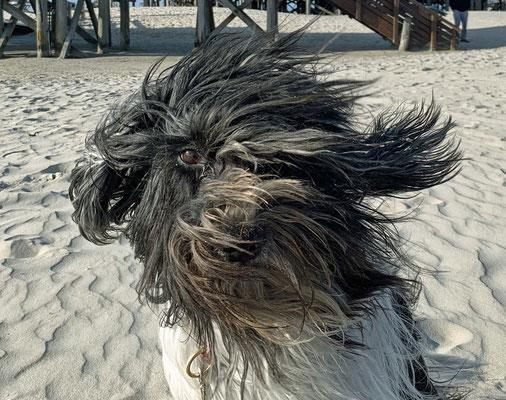 Heute ist es windig, ...