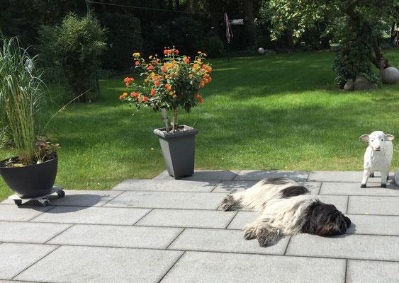 Danach schlafe ich eine Runde auf meiner Terrasse.