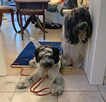Wir dürfen nicht in die Küche, wenn Frauchen oder Herrchen dort werkeln. Dann heißt es : Wo wartet der Hund?