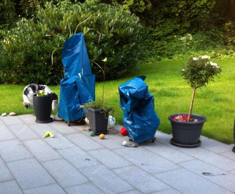 Morgens, am 26.7., waren die 2 Miniteiche auf der Terrasse verhüllt. War  Herr Christo da? Ich habe ihn nicht gehört. Ich bin ja auch kein Wachhund!