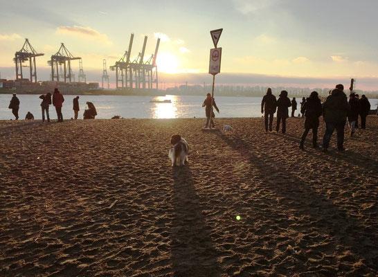 Bei der Strandperle bin ich dann noch einmal auf den Zwutsch gegangen, ...