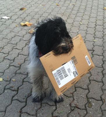 Ey, ich habe die Post gefangen! Öffnen!