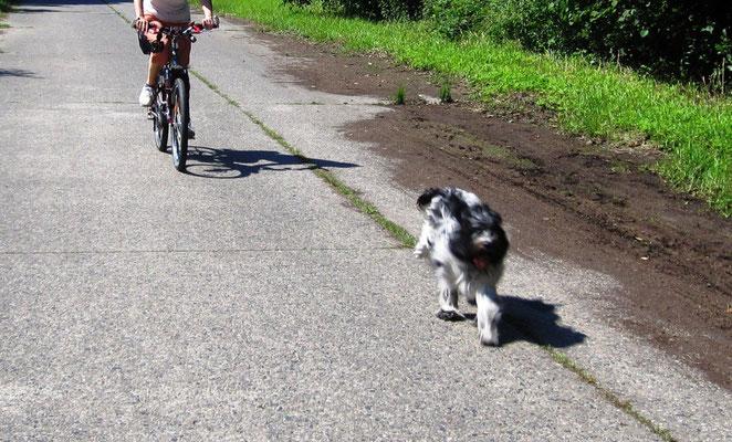 Frauchen übt, beim Fahrrad fahren neben mir zu bleiben.