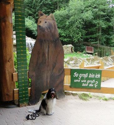 ... aber danach war es nicht mehr gefährlich. Wir waren am Bärengehege ...