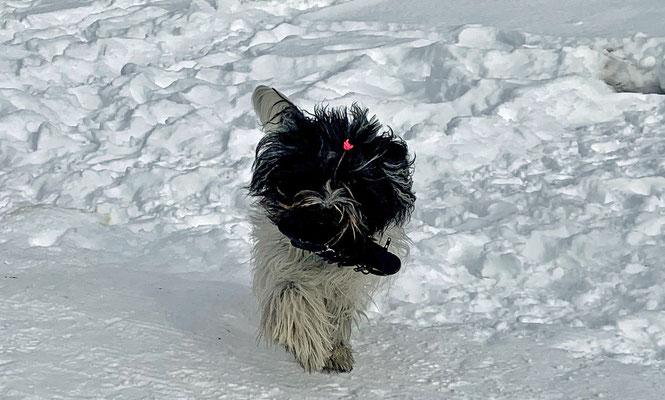 ... mein Handschuh, oder?