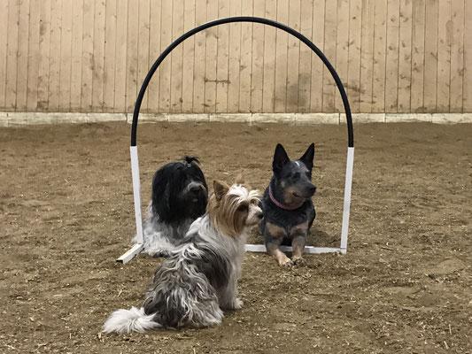 Ein Teil der Hoopers-Truppe: Hedley, Schnulli und ich.