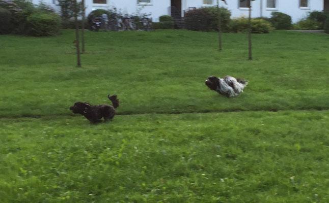 Ein kleines Rennen mit Findus.