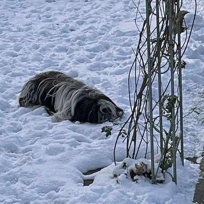 Zu Hause stecken wir die Nase noch einmal in den Schnee.