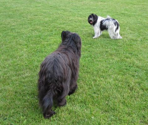 Ich habe mich endlich mal wieder mit Zara getroffen. Sie war im Dezember der erste Hund, den ich kennengelernt habe, nachdem ich von Mama und den Geschwistern weg bin.