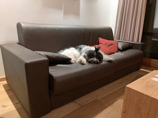 Eigentlich mag ich gar nicht aufs Sofa; ...