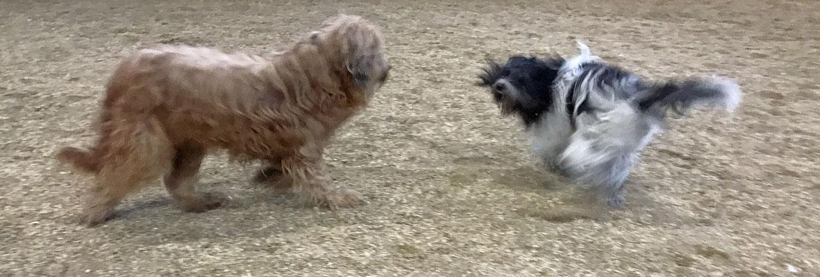 Geronimo und ich haben neulich vor dem Training gespielt, danach hatten wir keine Lust mehr, zu trainieren.