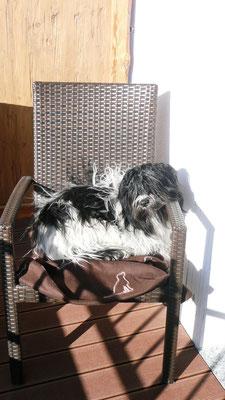 Herrchen und ich haben gemeinsam in der Sonne gesessen, ich habe natürlich den Sessel  MIT  den Armlehnen bekommen.