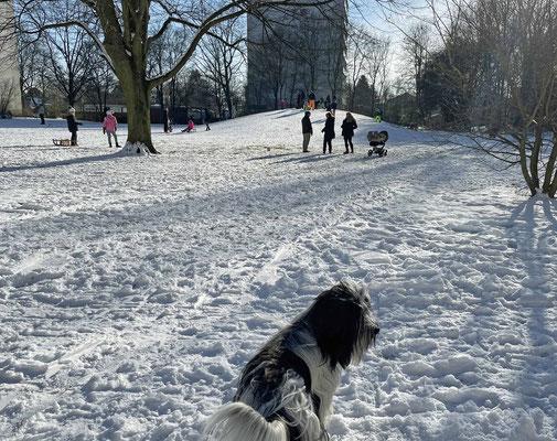 Mittags an unserem Hundeberg, jetzt ist es ein Rodelberg!