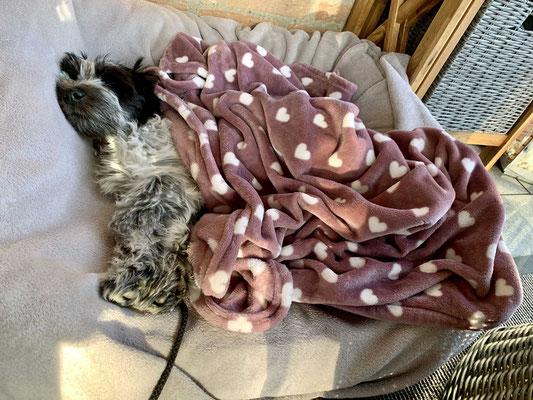 Heute ist es kühl und ich habe etwas feuchtes Fell, schon bekomme ich noch eine Decke. Schlechter Service geht anders!