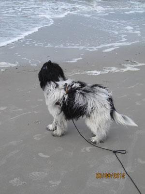 Am Ende vom Sand ist Wasser. Es will spielen, denn es bewegt sich auf mich zu und wieder weg.