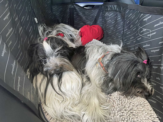 Wir im Auto, ich versuche mit Jule zu kuscheln.