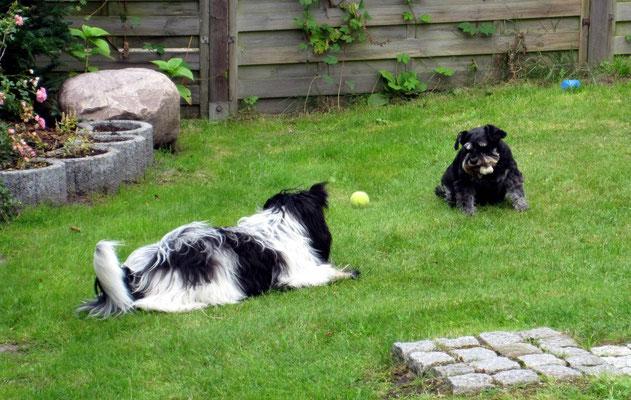 ... und ich bekomme ihn nicht mehr wieder. Diese erwachsenen Hunde haben Tricks  drauf, sage ich Euch!