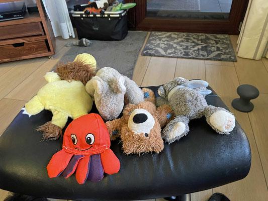 Meine kranken Stofftiere sind von der Intensivstation entlassen und kehren teilamputiert in den Spielkorb zurück.
