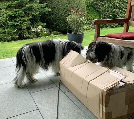 Als wir nach Hause kamen, hatten wir Post.
