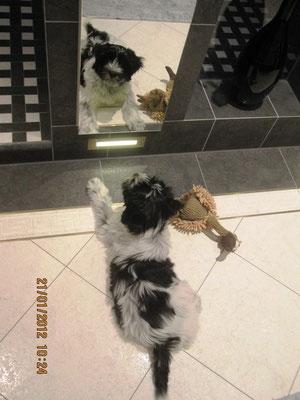 Morgens der erste Ärger: Der blöde andere Hund hat tatsächlich das gleiche Spielzeug wie ich - wenn ich den erwische ...