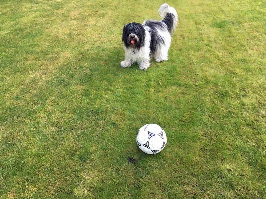 Herrchen spielt immer so klasse mit mir Fussball.