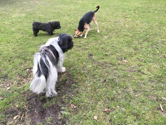 Bei uns im Park mit Buddy ...