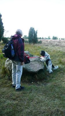In der Heide: Frauchen sagt, ich soll auf den Stein hüpfen, aber er ist so hoch.