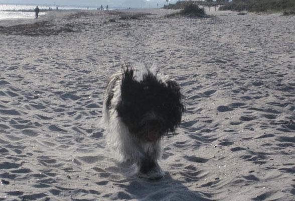 ... aber ich kann auch im Sand hinter der Wurst her rennen.