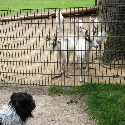 Alle waren hinter einem Zaun, ...