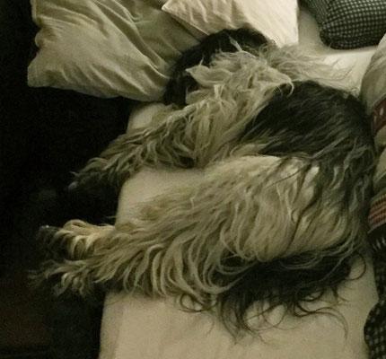 Neulich war ich sooooo müde und kam ganz zufällig an diesem Bett vorbei. Es lud mich ein, hineinzugehen.