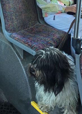 Wir sind im Skibus unterwegs zur Talstation.