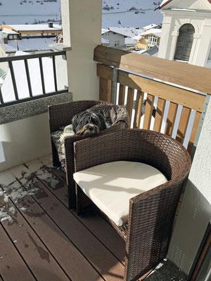 Jetzt hat Herrchen auch einen bequemen Stuhl.