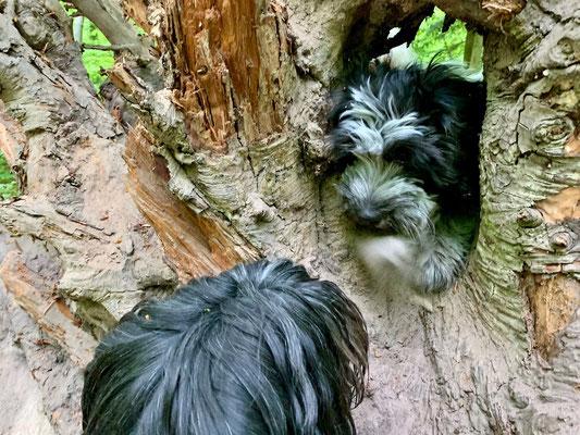 Frauchen hat diese Baumwurzel gefunden, ...