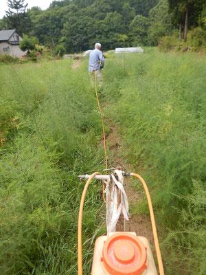 除草剤散布作業