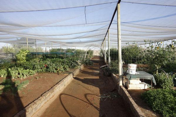 Eigener Gemüseanbau