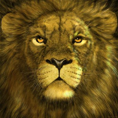 Löwe! Studie.