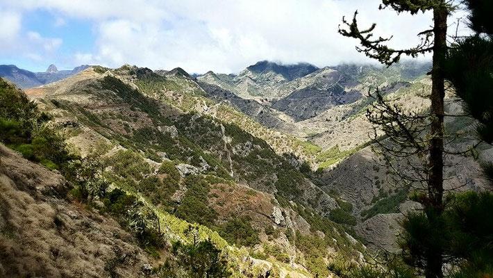 Noch ein Gesicht Gomeras: steile Kiefernwälder
