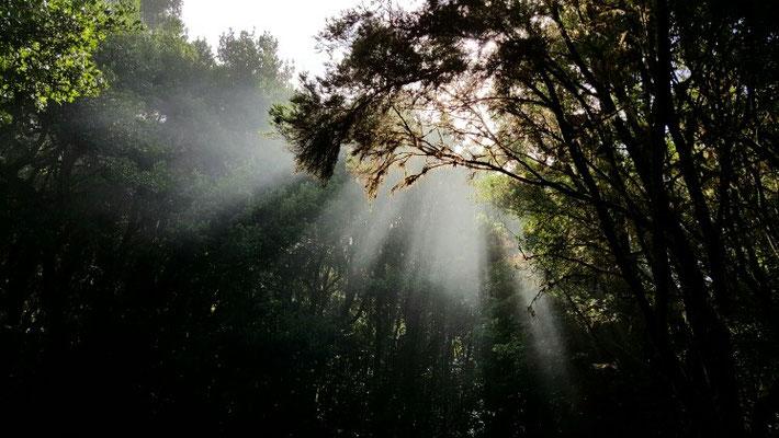 Sonne und Nebel - ein magisches Gespann
