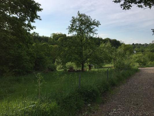 Ökozelle des Nabu Ennepe-Ruhr in Hattingen-Holthausen. Wir haben hier die Tagfalter- und Nachtfalterfauna eingehend untersucht.