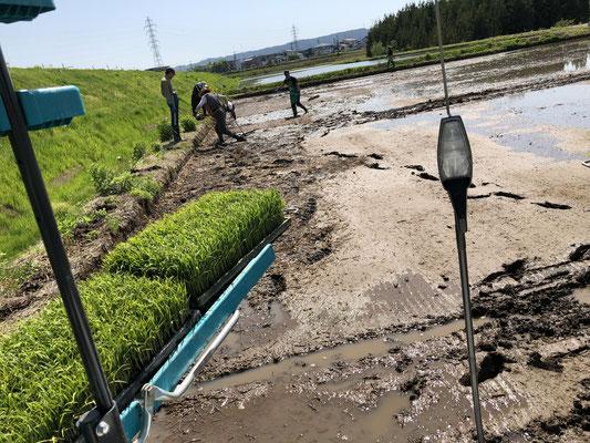 田んぼの隅に寄った藁くずの片付けも大事な仕事です。