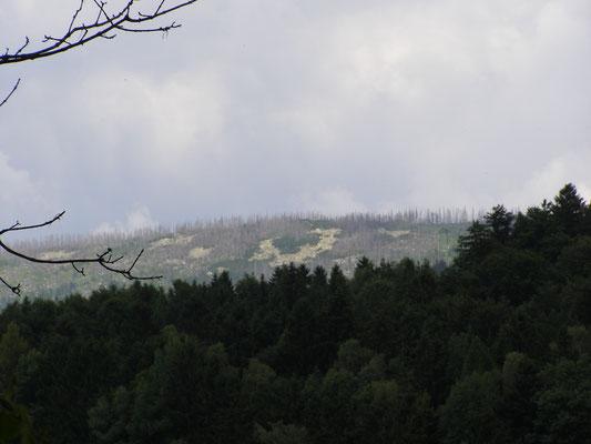 Bilck auf die Pisten im Skigebiet Hochficht