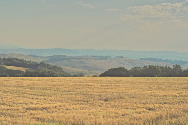 Crete Senesi, Summer No. 5