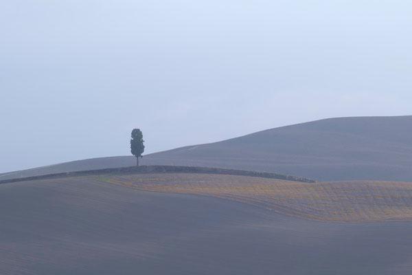 Crete Senesi, Autumn No. 29