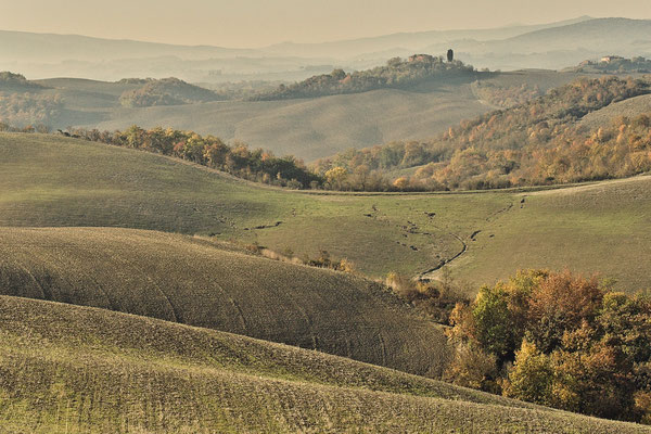 Crete Senesi, Autumn No. 13