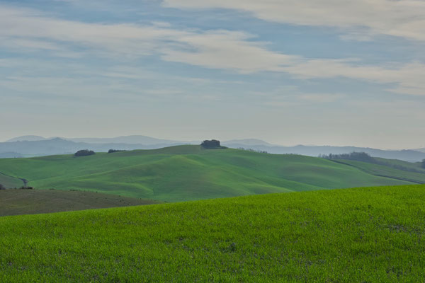 Crete Senesi, Winter No. 41