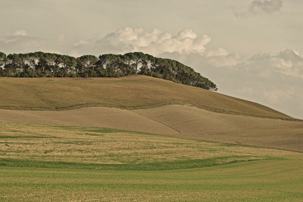 Crete Senesi, Autumn No. 30