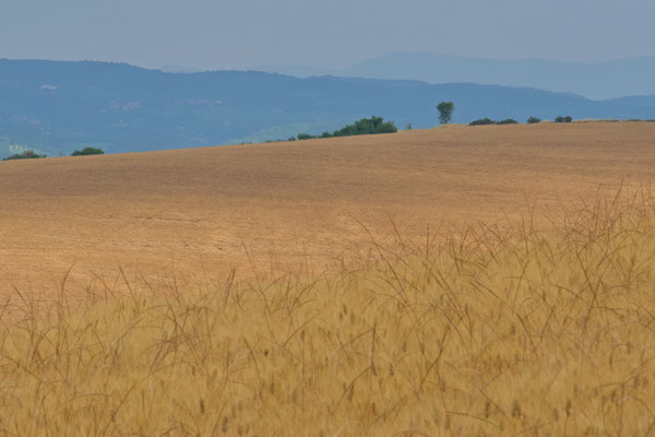 Crete Senesi, Summer No. 21