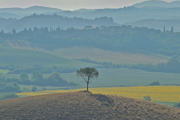 Crete Senesi, Summer No. 4